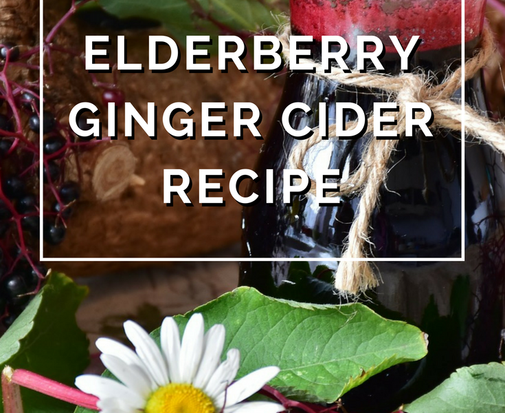 Elderberry Ginger Cider Recipe by Annie B Kay - anniebkay.com
