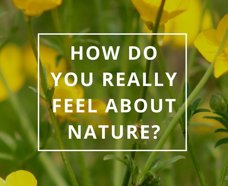 How Do You Really Feel About Nature? by Annie B Kay Pinterest