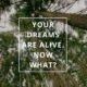 Your Dreams are Alive. Now What? by Annie B Kay Pinterest