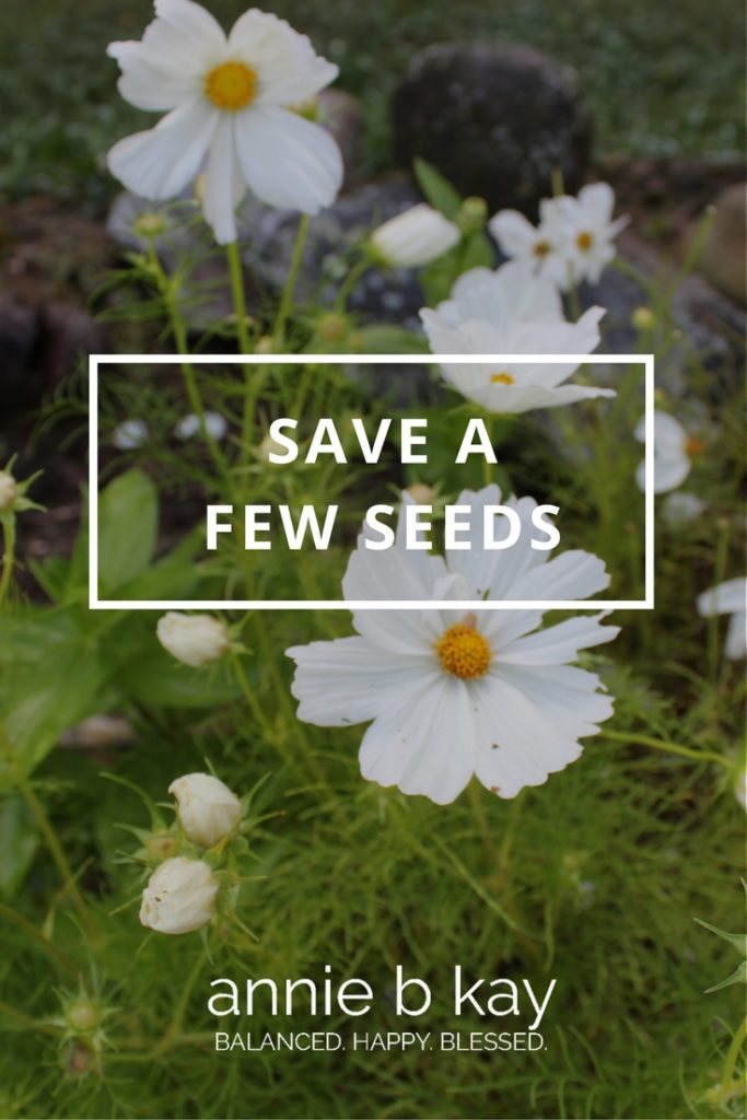 Save a Few Seeds by Annie B Kay Pinterest