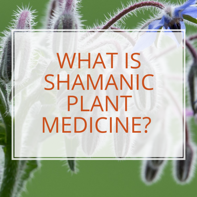 What is Shamanic Plant Medicine?